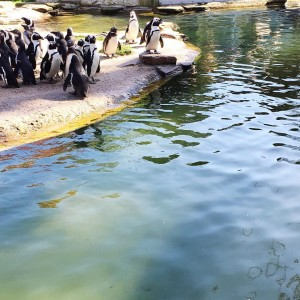 The penguin feeding at the Antwerp zoo was all kindshellip