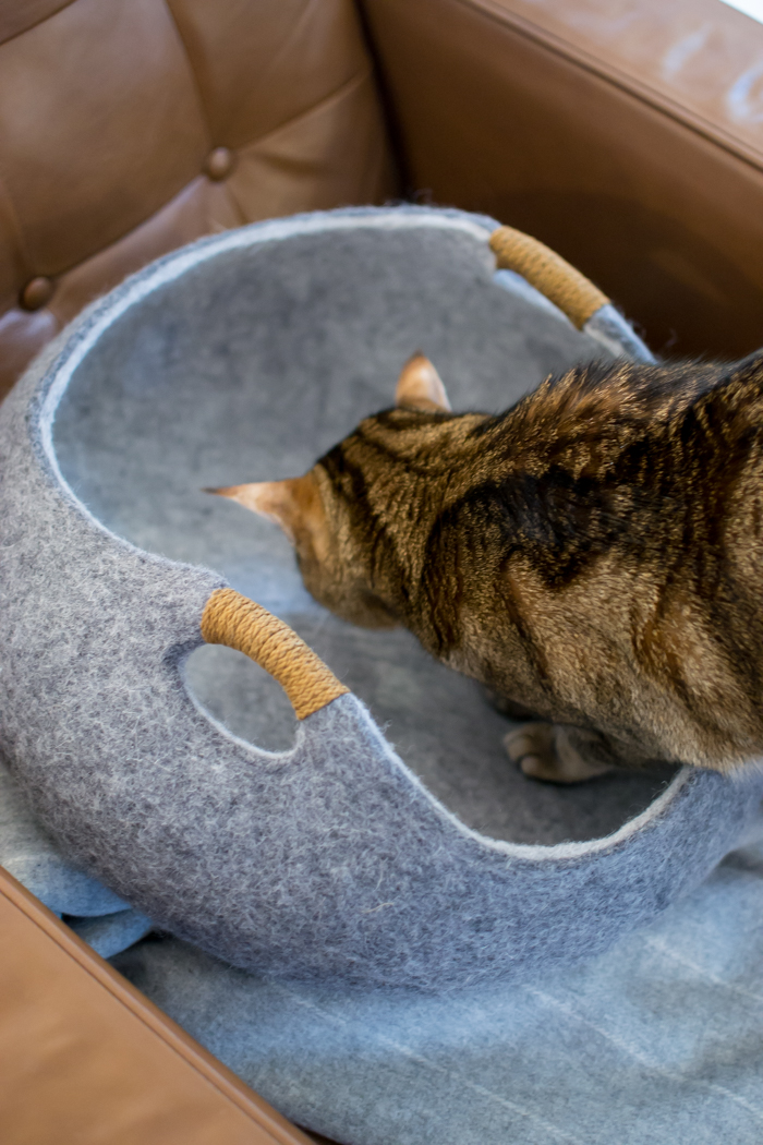 Tuft + Paw Modern Cat Furniture Review